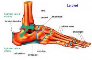 amélioration-mobilité-cheville-astragale-pied
