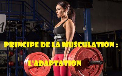 Principes de musculation : Le principe d'adaptation (I)