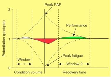 Potentiation-post-activation-et-Fatigue-powerliftingmag