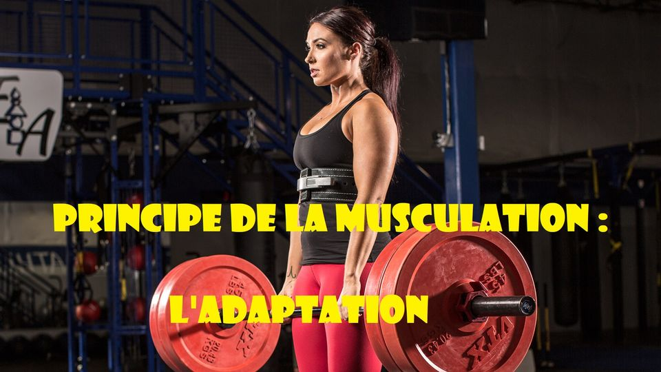 Principes de musculation : Le principe d'adaptation (I)
