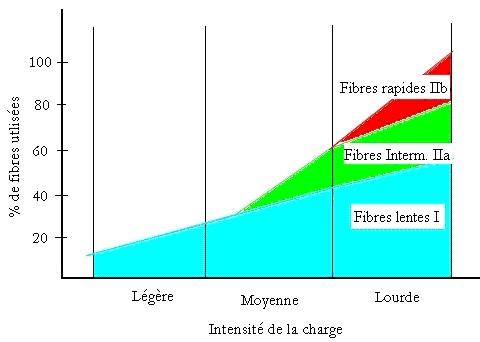 recrutement-fibres-en-fonction-intensité-exercice-Costill