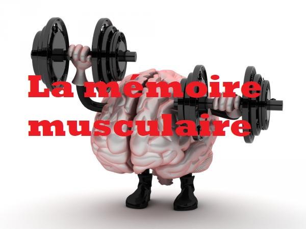 Le rôle et l'importance de la mémoire musculaire